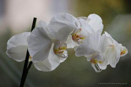 фото орхидей