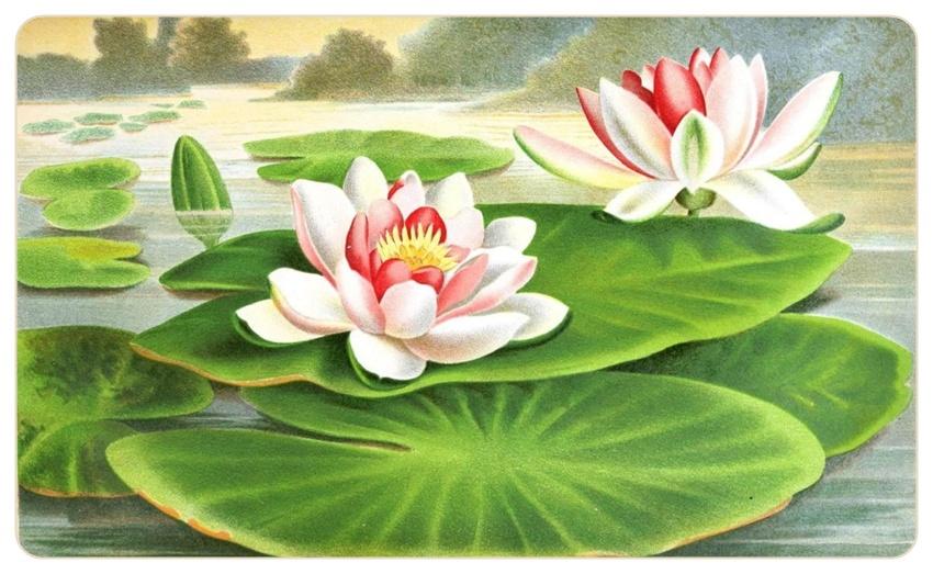 Картинки водяной лилии