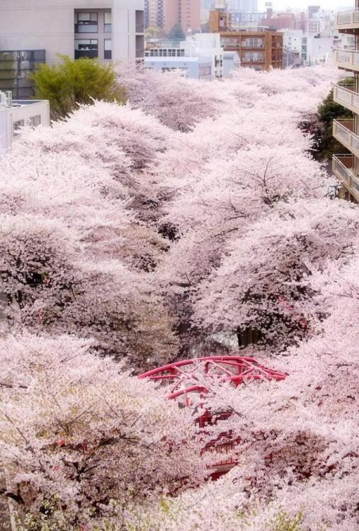 Пролет в Япония