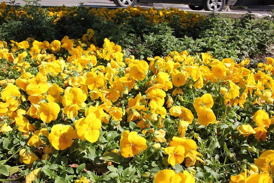 Цветочный рай в Сочи