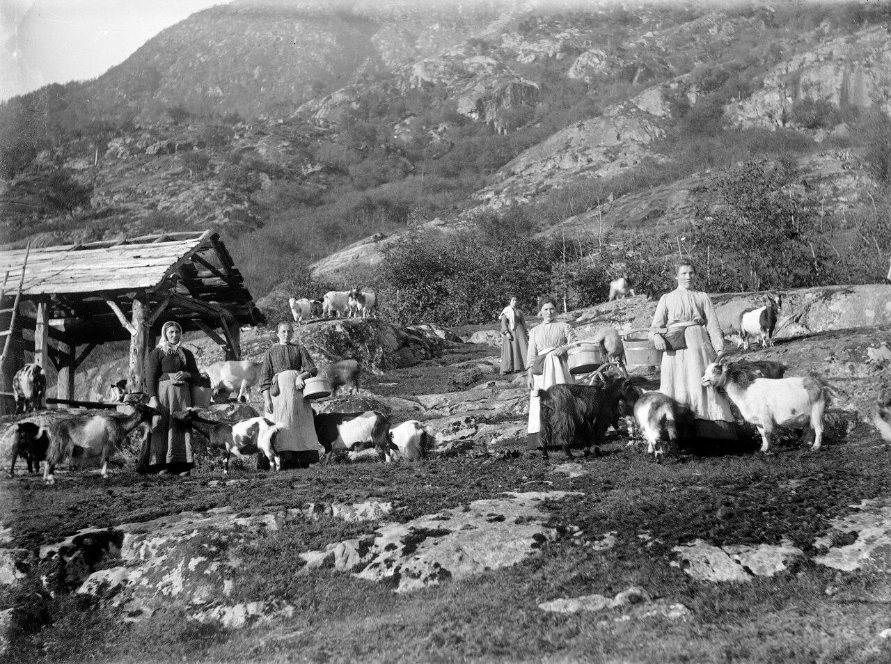 Доярки, около 1890-1910