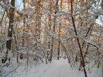 теплый лес 1.jpg