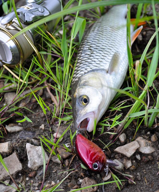 Изображение 1 : Подводя итоги 2012 рыболовного года.