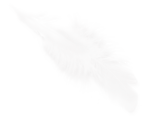 CharlieNco_Sweet Valentine_Feather.png