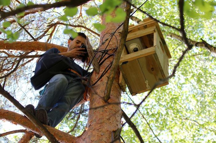 орнитолог устанавливает камеру