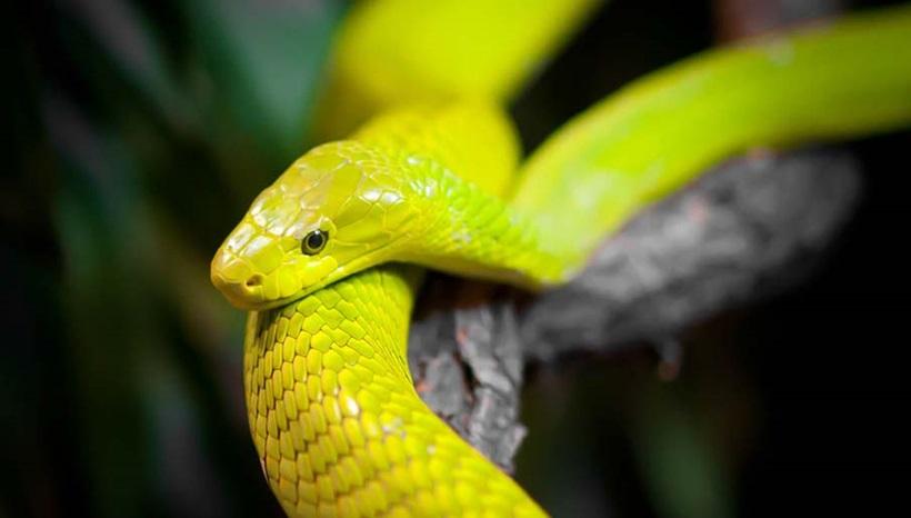 Пугающие фотографии змей 0 134ad0 7a1c3acc orig