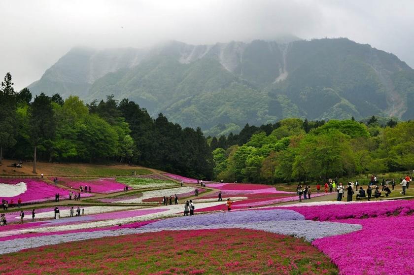 Цветущий розовым японский парк Хицудзияма. Фотографии 0 141ad7 234dae6 orig