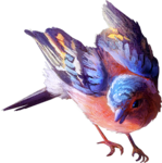 TurningLeafApothecary_LorieD_cc_chaffinch2a.png