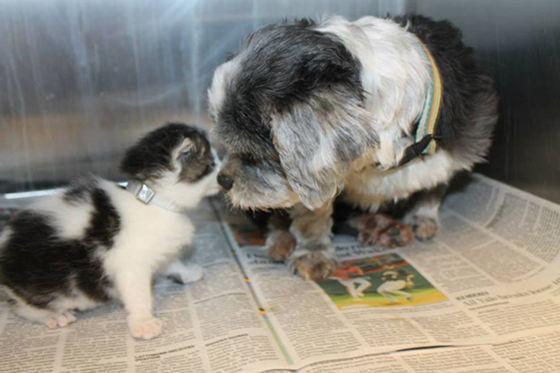 удивительная история собаки и котенка