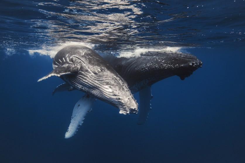 Потрясающие фотографии морских млекопитающих Габи Баратью (Gaby Barathieu)
