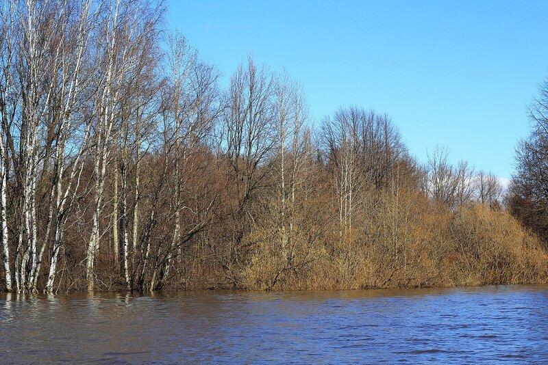 Заросли, деревья и кусты озера Просного