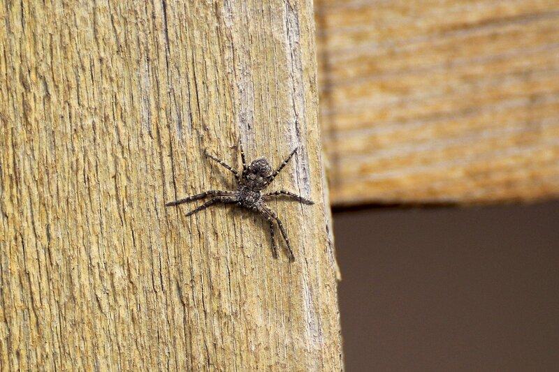 паук на заборной доске