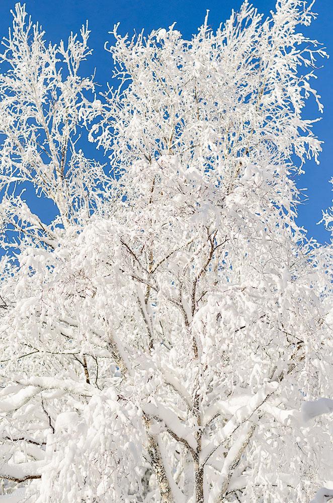 Фотография 4. Зима в Таганае. Отзыв туриста об экскурсии в парк. 1/4000, +0.33 EV, 2.5, 200, 50.