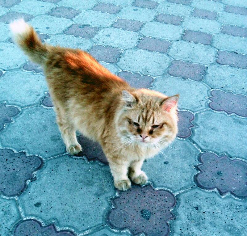 Осенние зарисовки жизни кошачьей