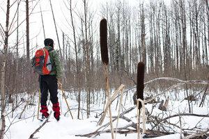 на лыжах в урочище Точище