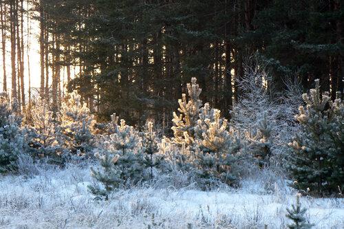 зимняя прогулка край леса
