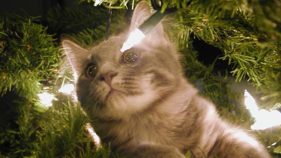 Коты на ёлке - фото 32