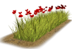 Lug_Grass_Flower (4).png