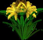 Lug_Grass_Flower (62).png