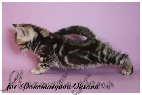 http://img-fotki.yandex.ru/get/5639/162753204.26/0_c8e14_93199cef_L.jpg