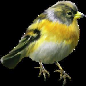 Обои птицы мира птицы синицы трио природа ветка боке
