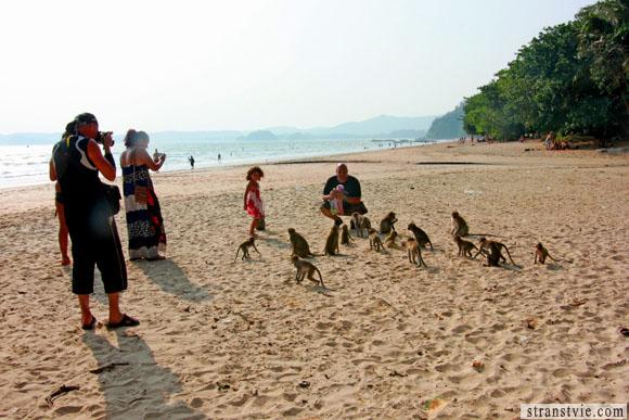 обезьяны на пляже в краби