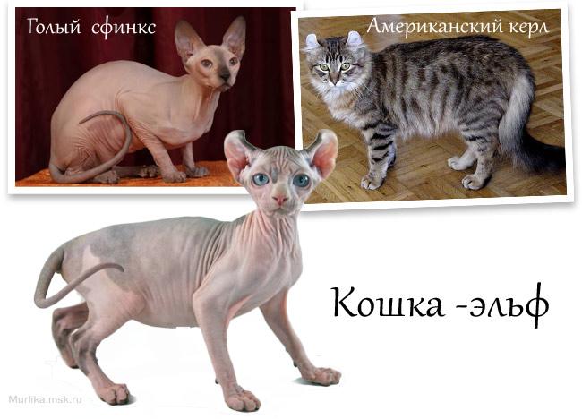 Кошки - эльфы
