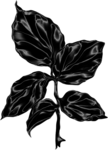 Lady in Black (110).png