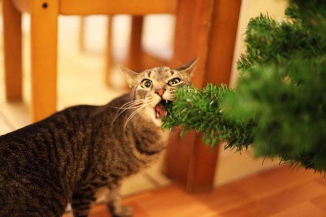 Неочень вкусно, ноя— кот. Это моя работа.