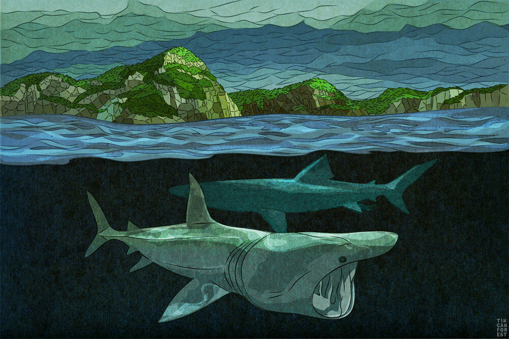 Basking Shark  by Tin Can Forest