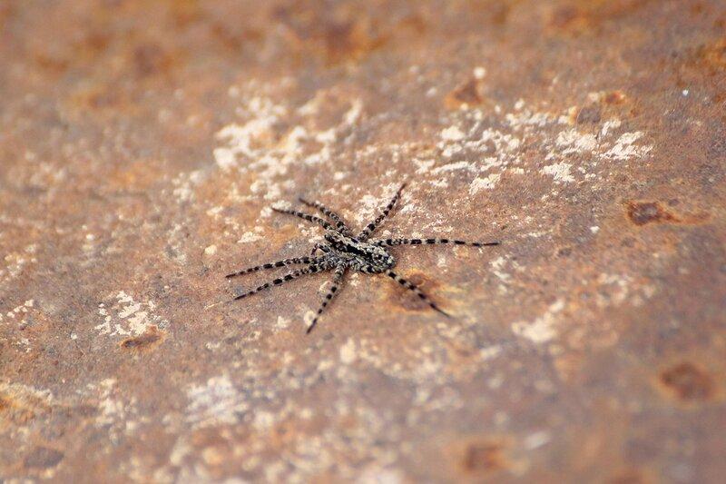 паук на ржавой железяке