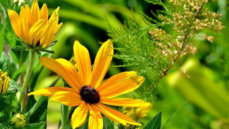 картинки на рабочий стол природа цветы № 516362  скачать