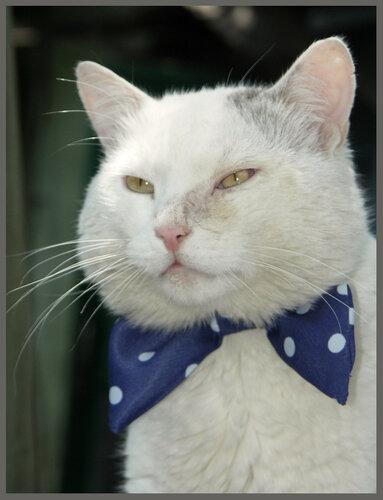 - Я сегодня праздничный кот!