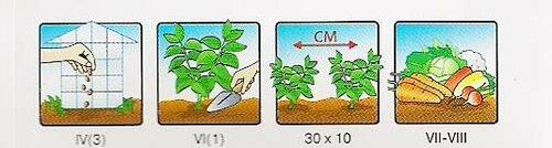 Скоро весна выбираем себе семена!