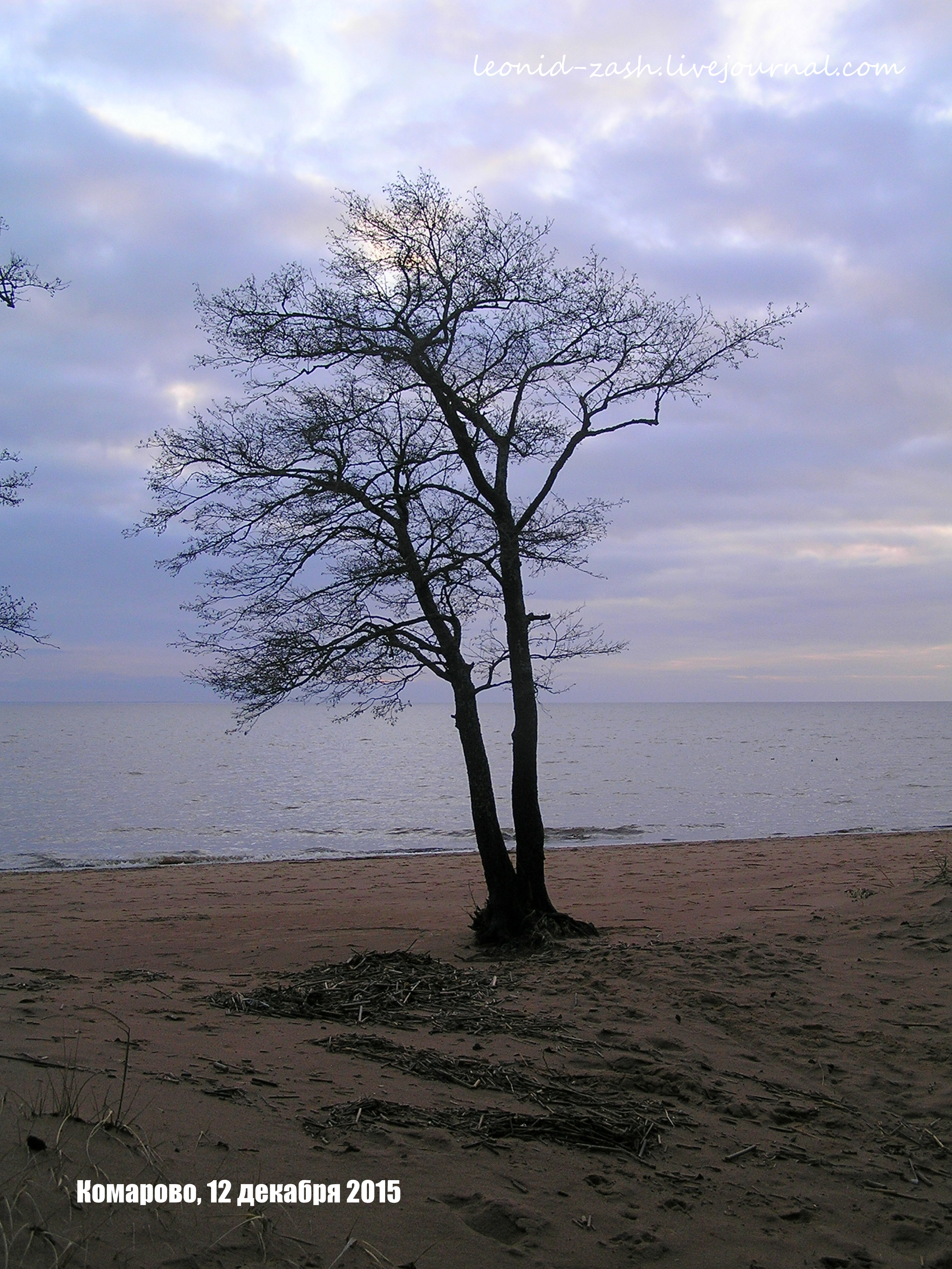 Комарово Петербург 15.JPG