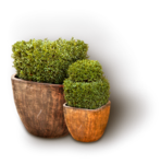 LottaDesigns_OldWorld_flower_pots_sh.png