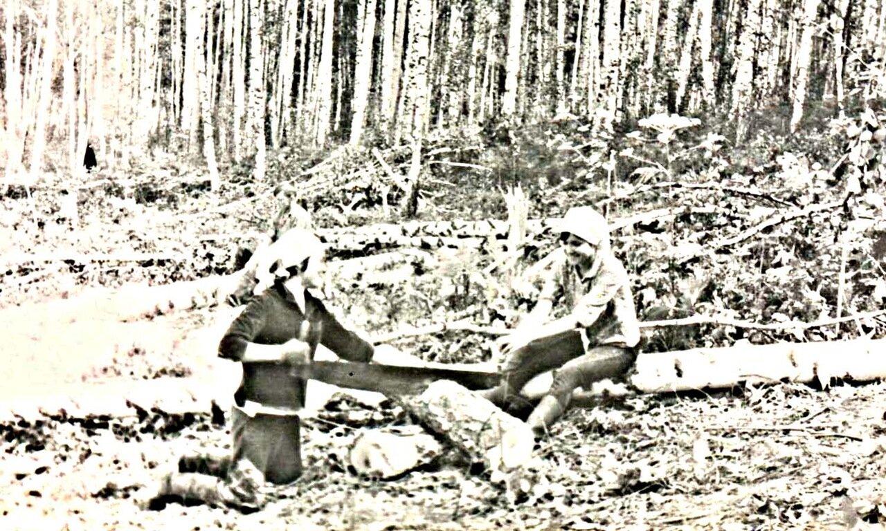 21. Заготовка дров. 1967год