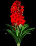 Lug_Grass_Flower (63).png