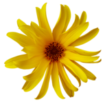 feli_gs_flower8.png