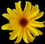 feli_gs_flower8.png