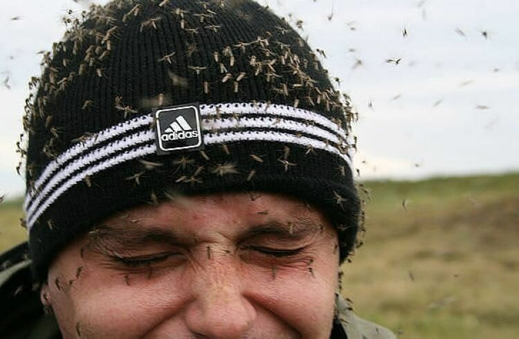 комары.jpg
