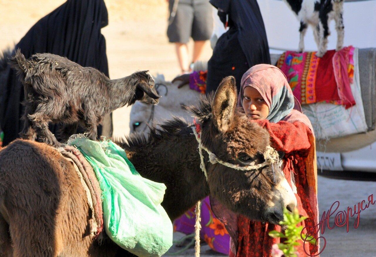 Рассказы ира и ослик 22 фотография