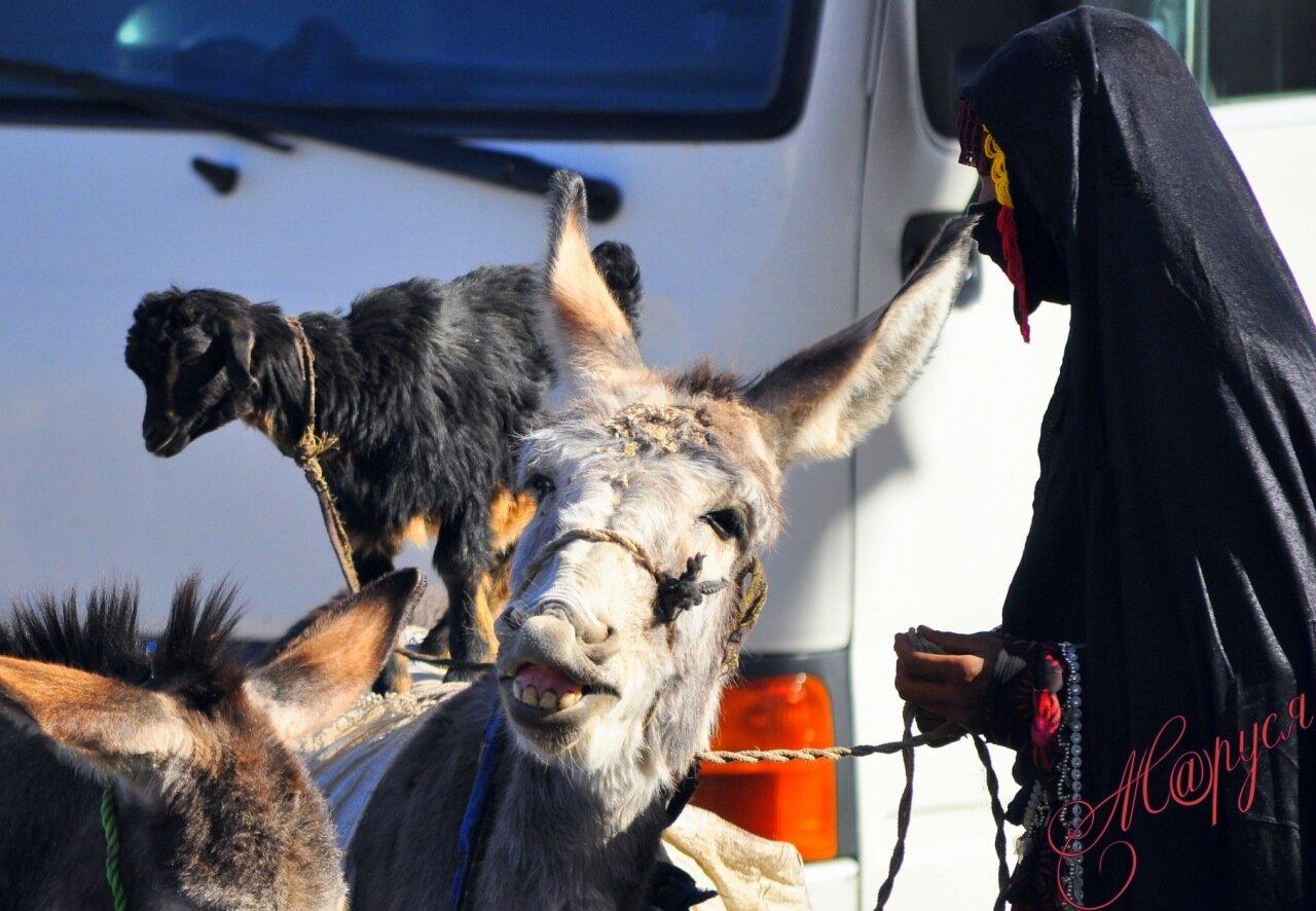 Рассказы ира и ослик 1 фотография