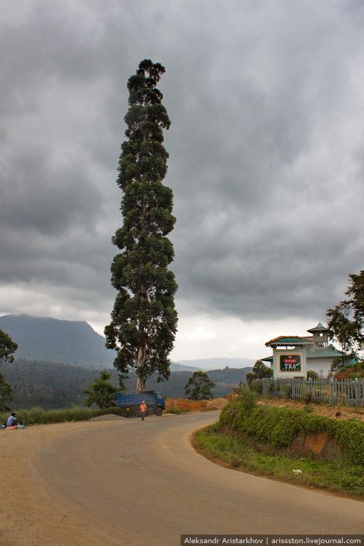 Шри-Ланка_Пик Адама_15