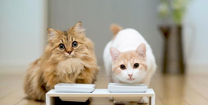 кошка отказывается от еды что делать фото