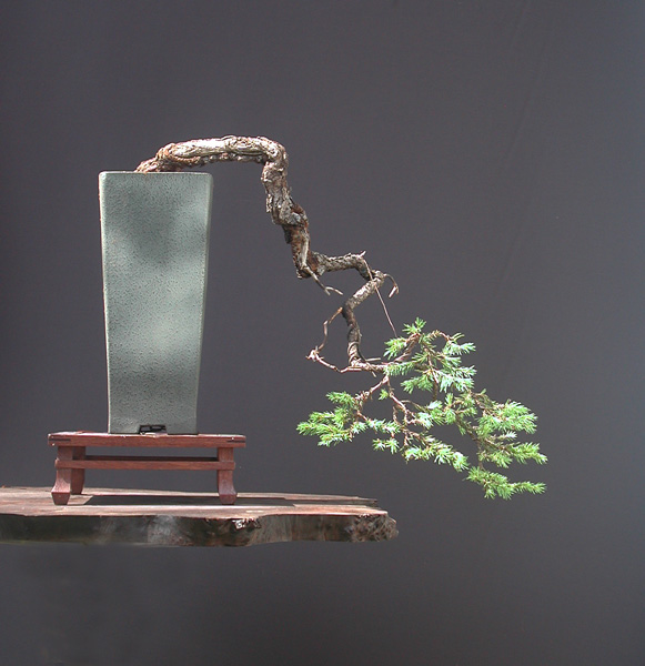 Искусство бонсаи. 50 самых красивых примеров
