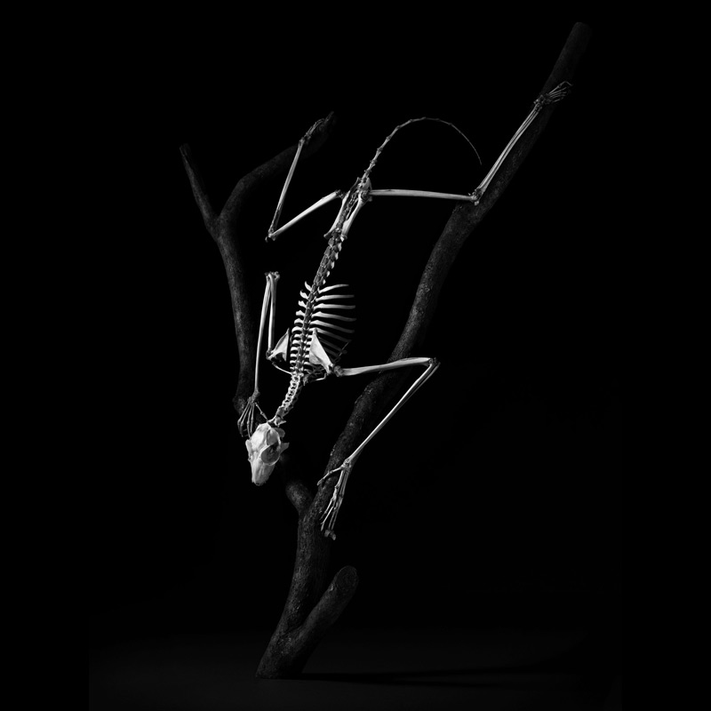 Фотографии анатомических скелетов