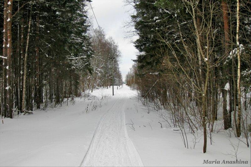 Просека к Протасовским полям, дорожка в сторону конюшни