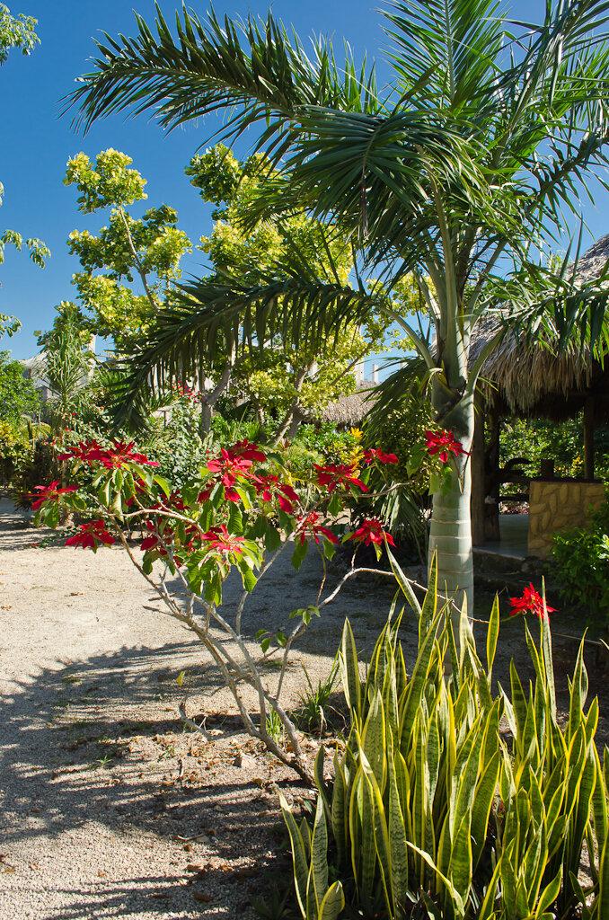 """6. Красота в отеле """"Villas Ecotucan"""". Где поселиться во время отдыха в Мексике. Камера Nikon D5100 KIT 18-55. Настройки: 1/125, 11.0, 200, 18."""