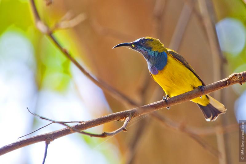 Птицы Индонезии